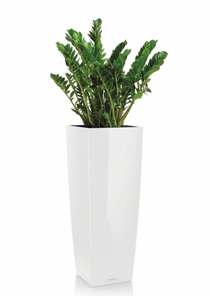 Kies voor grote kamerplanten